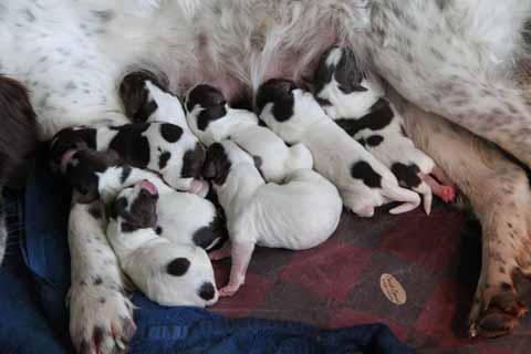 8 pups van teun1