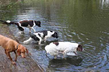 honden bij het water