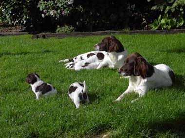 eva ot met pups in gras